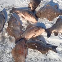 Зимняя ловля карася: где, когда, и на что ловить, Советы рыбакам